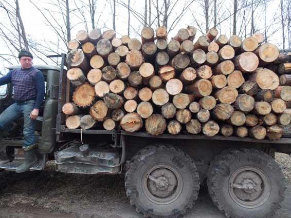 """Результат пошуку зображень за запитом """"вантажівка з лісом"""""""
